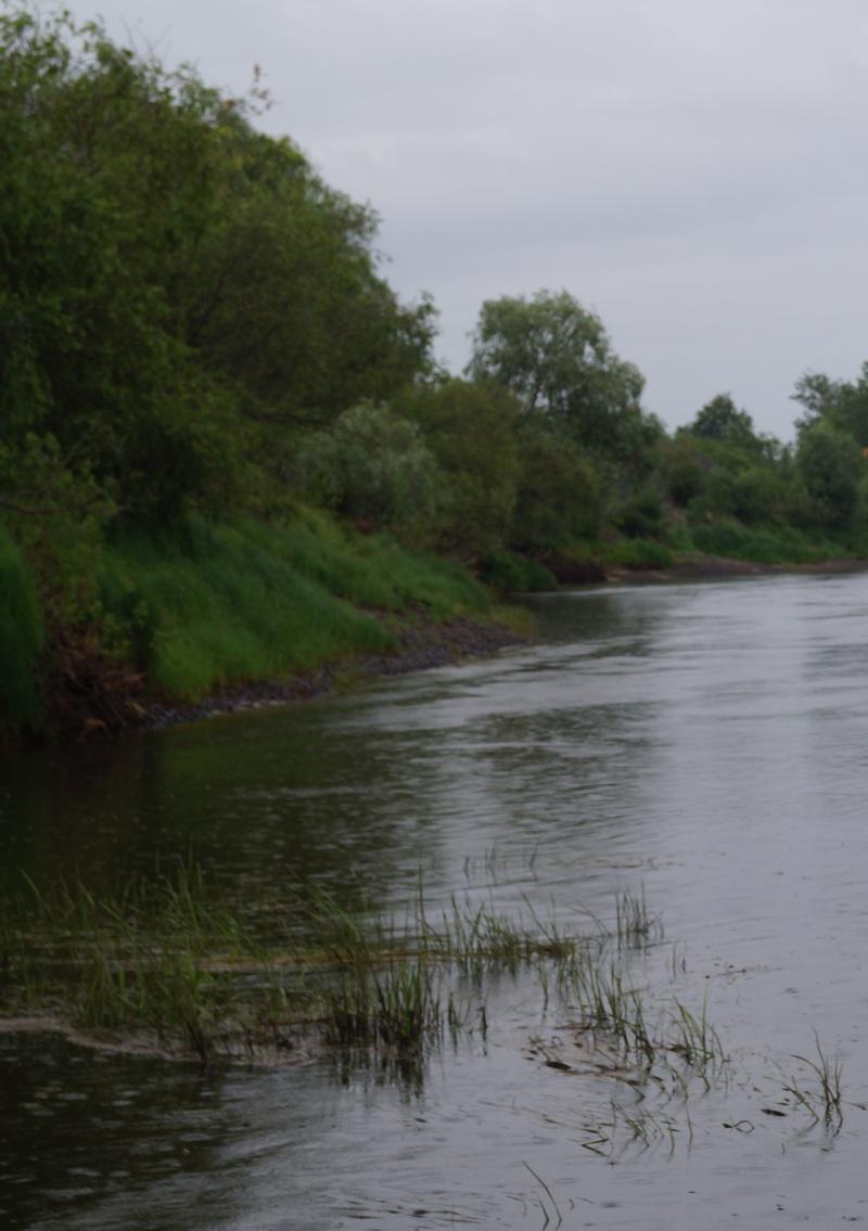 перспективное место ловли окуня на реке