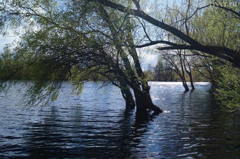 деревья в воде в паводок