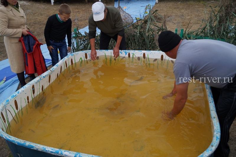 шуточные соревнования по рыбалке - ловля рыбы руками