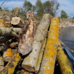 Костёр на берегу реки. Сбор валежника для костра при отдыхе на природе. Дрова для костра.
