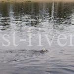 Ловля в проводку на течении и поплавочная удочка с кормушкой на реке и ручье, оснастка ловли в проводку