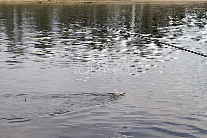 ловля поплавочной удочкой в проводку на течении с кормушкой