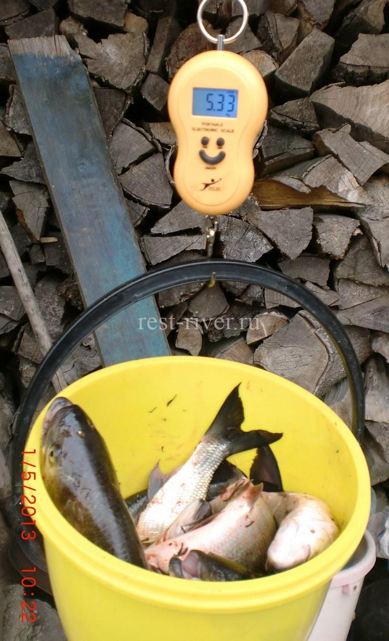 измерение в ведре общего веса улова