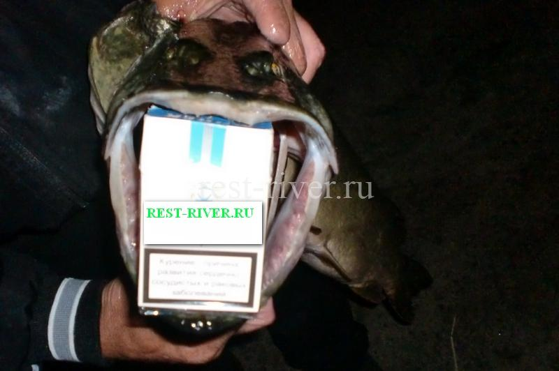 рыболовный трофей сравнение с пачкой сигарет
