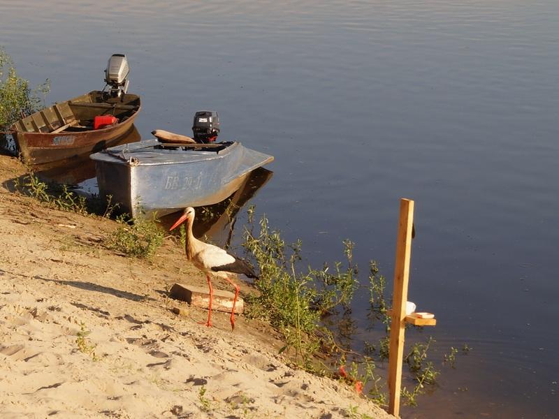 фото аиста возле рыбаков