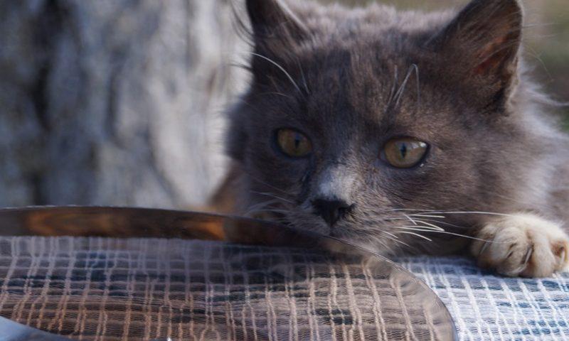 кот смотрит на рыбное блюдо