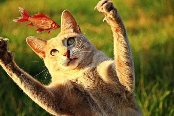 кот в воздухе ловит рыбу