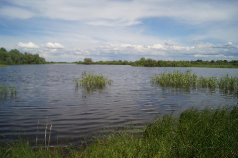 фото подтопленный берег