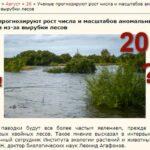 Дождевой паводок и вырубка лесов. Наводнение в Иркутской области 2019 года