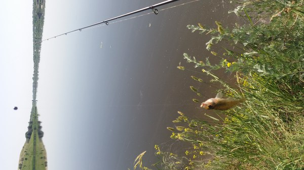 ловля окуня волочениемм насадка