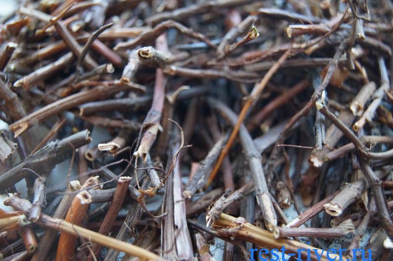 сушка собранного сабельника болотного