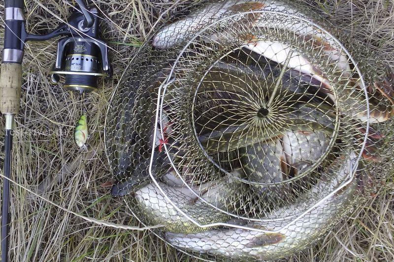 уловистый воблер для начинающих фото улова 5 кг щуки