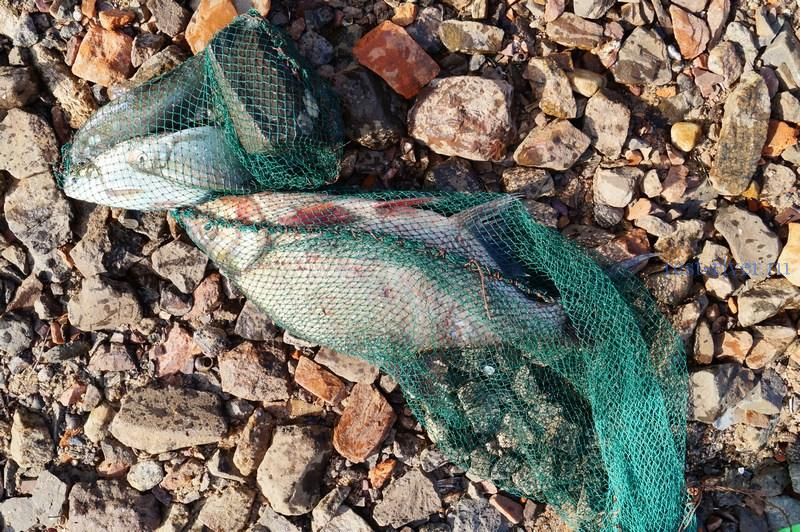 садок для рыбы своими руками из полимерной сетки