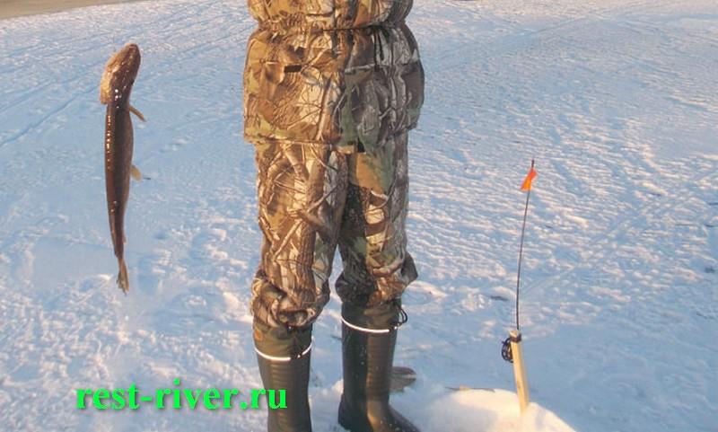 щука пойманная на зимнюю жерлицу на деревянной планке