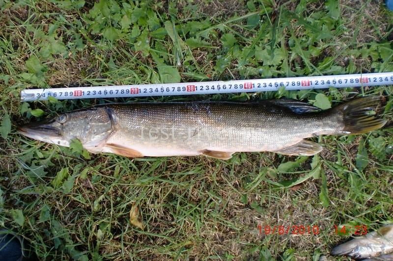 измерение длины рыбы щуки рулеткой