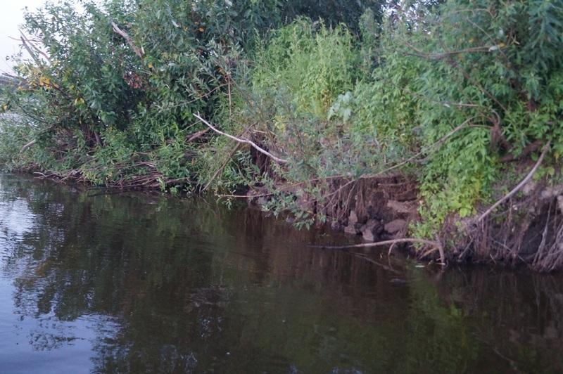 место ловли сома - крутой берег возле ямы