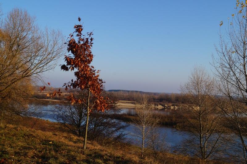 фото клёна на берегу реки