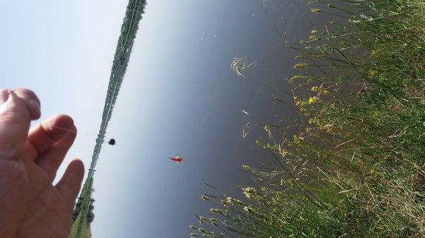 фото ловля окуня летом на мормышинг