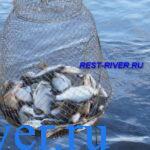 Почему в мае наблюдается один из пиков весеннего клева белой рыбы