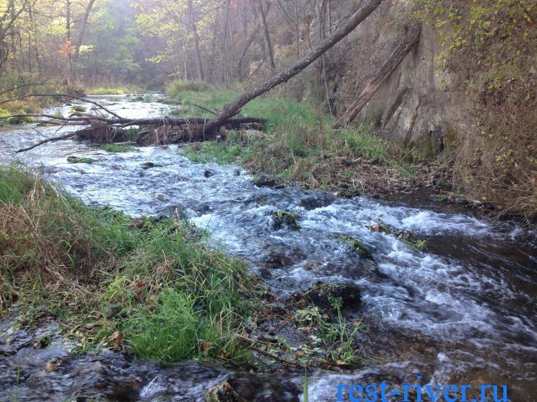плотина речных бобров